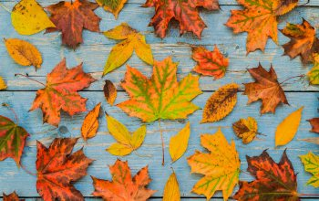 фон,доски,leaves,осен,maple,клен,colorful,листья,autumn,wood