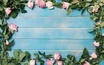 beauty,blue,background,summer,wood,Декор,colorful, розы,decoration,розовые,roses,flowers,pink